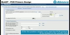 BLAST - PCR Primers Design