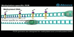 Methylation-specific PCR