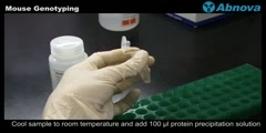 Mouse Genotyping