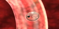 Animation of egg fertilization