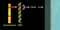 Genes, chromosomes, prions