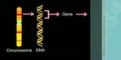 Genes, chromosomes, prions