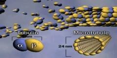 Microtubules Video