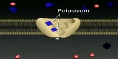 Active Transport Inside a Cell Membrane