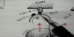 Lipoprotein Physiology_ Chylomicron