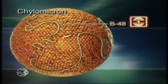 Metabolism of low density lipoprotein