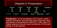 The process of discovery of the importance of Vitamin C