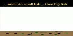 Bioaccumulation of Pollution in Waterways-Animation