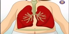 The respiratory system: how does it work