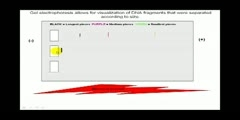 Basic idea behind gel electrophoresis