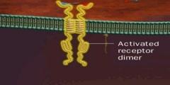 Receptor Tyrosine Kinase: Activation and Signalling