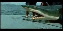 Fishing of Shark Funny Video