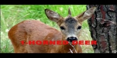Genetically Modified Animals - Deformed, Mutated,  Part 1