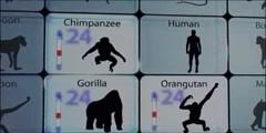 Modern genetics confirms darwin  theory of evolution