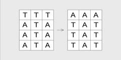 Visual DNA replication