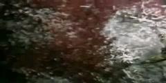 Oceans Endeavour Hydrothermal Vents