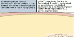 T Cell Transcription Factors activation