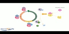 Proteins that Regulate the Cell Cycle