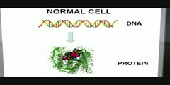 Cancer, cell cycle and checkpoints (1/2)