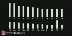 Chromosome Map