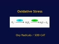 DNA Damage and Protection animation