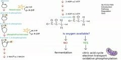 Glycolysis Tutorial