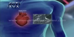 Adult stem cell and regeneration animated video