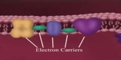 Electron Transport video