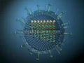 Introduction With H1N1 Virus - Swine Flu