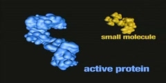 Inactivation of protein