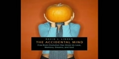 The accidental mind: an interview with Devid J Linden