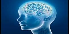 Brain evolution: an interview with Devid J Linden