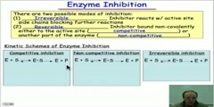 Molecular Mimicry  the Basis of Enzyme Inhibition video