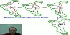 Aldolase-Catalyzed Aldol Addition- Mechanism