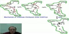 Aldolase-Catalyzed Aldol Addition- Mechanism