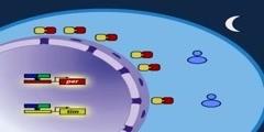 The Drosophila Molecular Clock Model Part 3