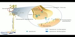 Serotonin Autoreceptors Video