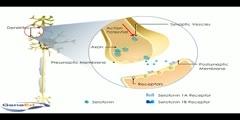 Serotonin Autoreceptors Video