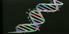 Genetics Entering Molecular Age