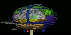Cerefy 3D Human Brain Atlas