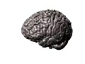 Whole Brain Tractography Video