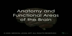 Anatomy of the Human Brain
