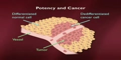How Cancer is Related to Adult Regeneration