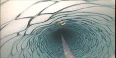 Shrimp Under Antarctic Ice