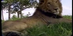 New BBC Earth channel on YouTube!