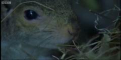 Squirrels nesting for newborns