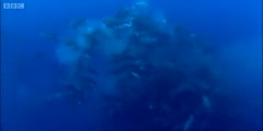 Memory Test  of  whale Sharks
