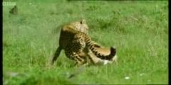 Life of Mammals; the triumph of the herbivores