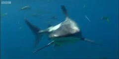 Repellent experiment  for Sharks