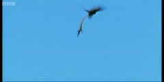 Wild Africa; The birds flying over Cape Highlands